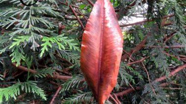 088-1a-copper-leaf-600x600-1