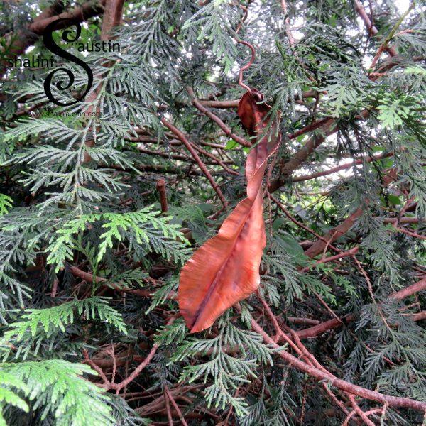 Pretty Copper Leaf Sculpture 03 | Indoor & Outdoor  Read More: https://shaliniaustin.com/shop/pretty-copper-leaf-sculpture-03-handcrafted/